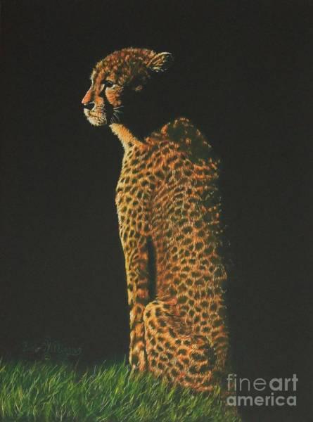 Cheetah At Sunset Poster