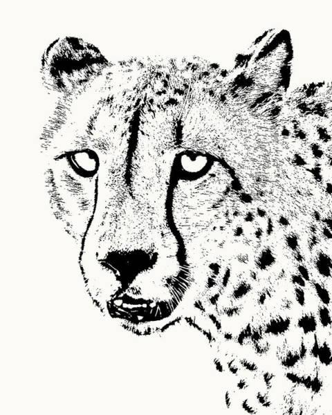Cheetah Close-up Poster