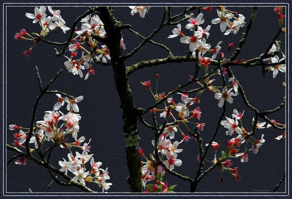 Cherry Blossoms On Dark Bkgrd Poster