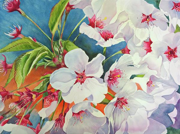 Cherry Blossomsa Poster