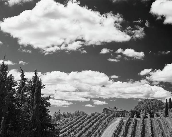 Chianti Vineyards Poster
