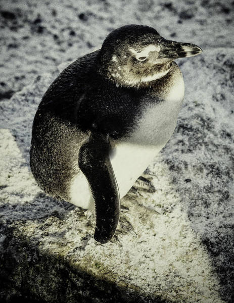 Chillypenguin Poster