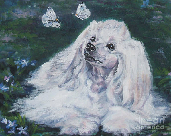 Chinese Crested Powderpuff With Butterflies Poster
