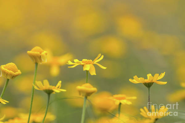 Close Up Of Yellow Flower With Blur Background Poster