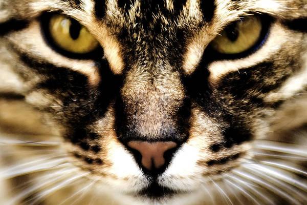 Close Up Shot Of A Cat Poster