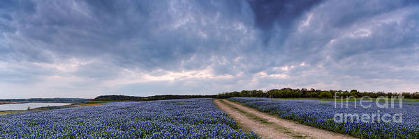 Cloud Vortex Over Bluebonnets At Muleshoe Bend Recreation Area - Spicewood Texas Hill Country Poster