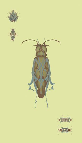 Cockroach Specimen Poster