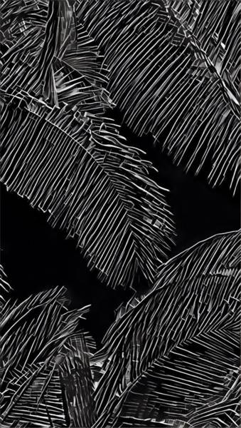 Coconut Palms In Black And White Poster
