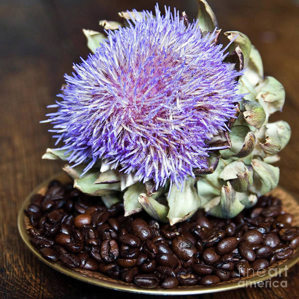 Coffee Beans And Blue Artichoke Poster