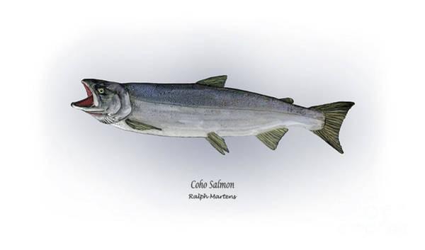 Coho Salmon Poster