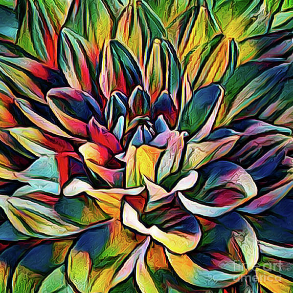 Colorful Abstract Dahlia Poster