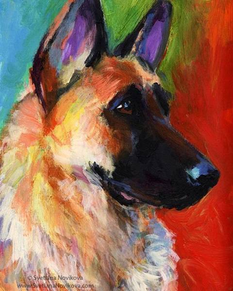 Colorful German Shepherd Painting By Poster