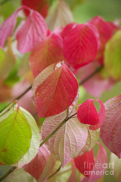 Colorful Leafs  Poster