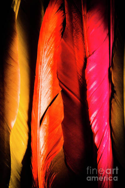 Colourful Feather Art Poster