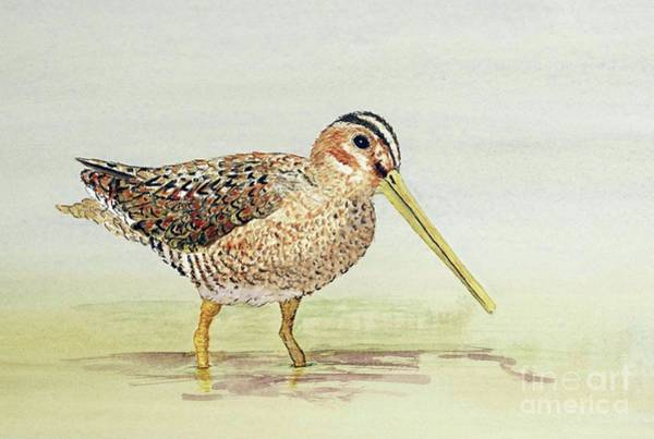 Common Snipe Wading Poster