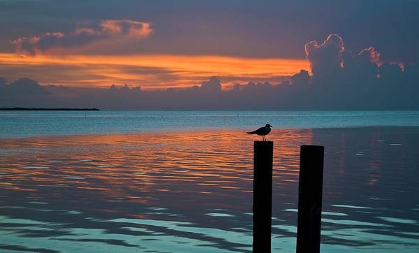 Conch Key Sunset Bird On Piling Poster