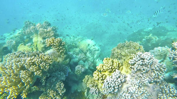 Poster featuring the photograph Coral by Debbie Cundy