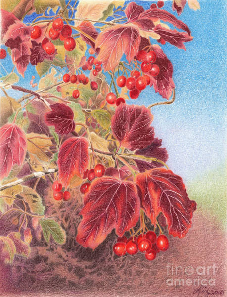 Cranberry Bush In Autumn Poster