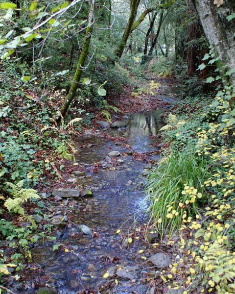 Creek On Mt Tamalpais 2 Poster