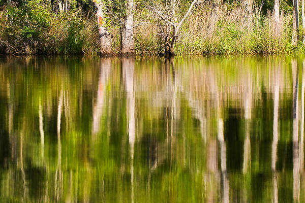 Creekside Reflections Poster