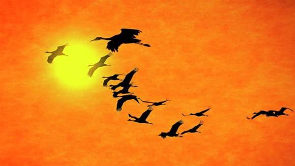 Crossing The Sun, Sandhill Cranes Poster