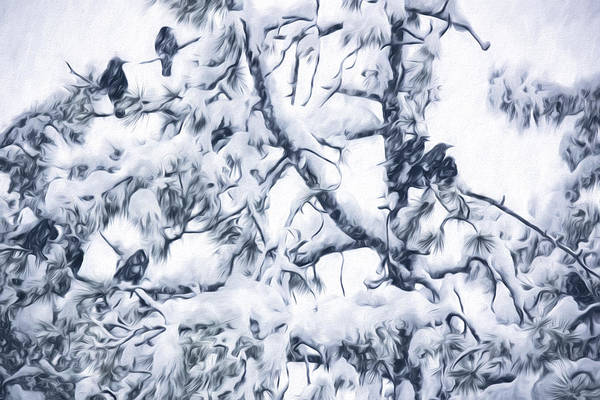 Crows In Snow Poster