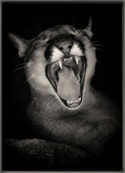Cruz Yawning Poster