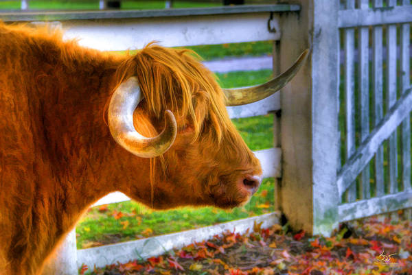 Poster featuring the photograph Curly Horn Beastie by Sam Davis Johnson