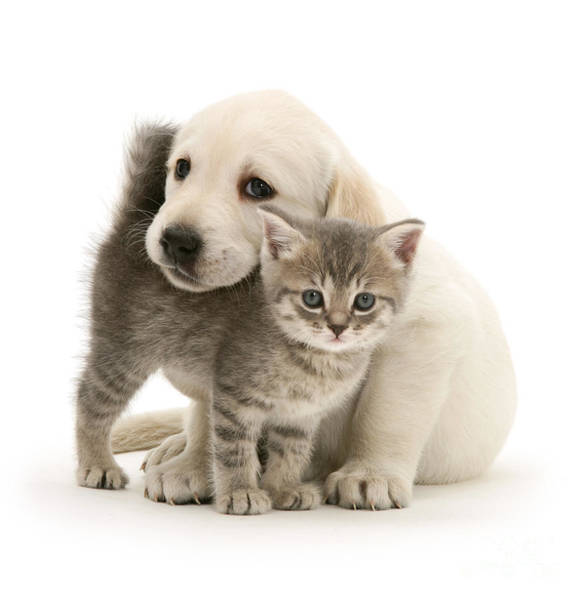 Cute Kitten And Perfect Puppy Poster