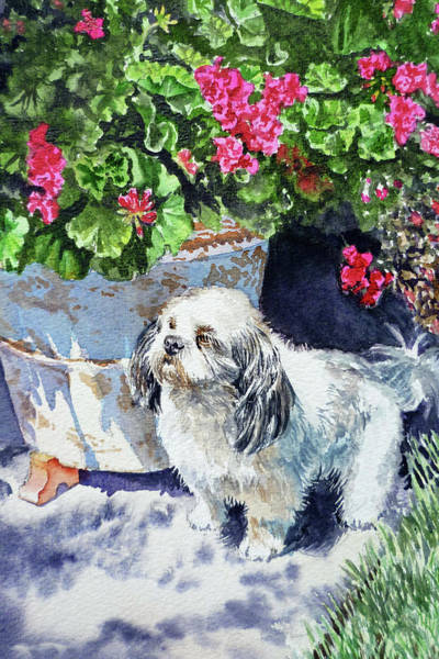 Cute Shih Tzu Dog Under Geranium  Poster