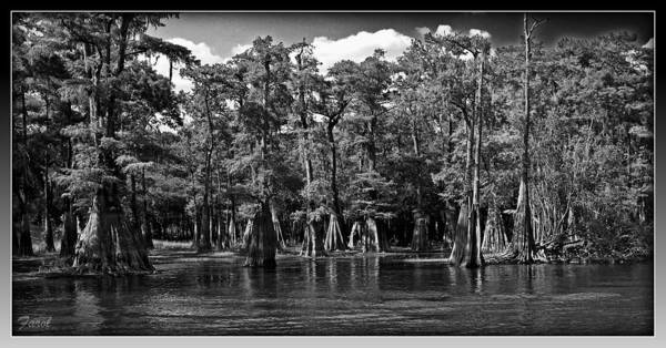 Cypress On The Suwannee Poster