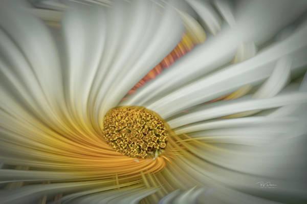 Daisy Swirl Poster