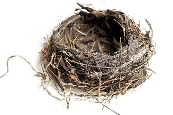 Damaged Birds Nest Isolated On White Poster
