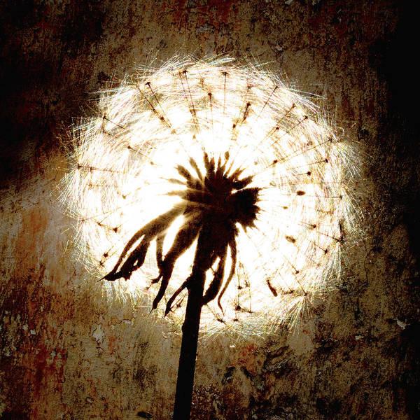 Dandelion Art 5 Poster