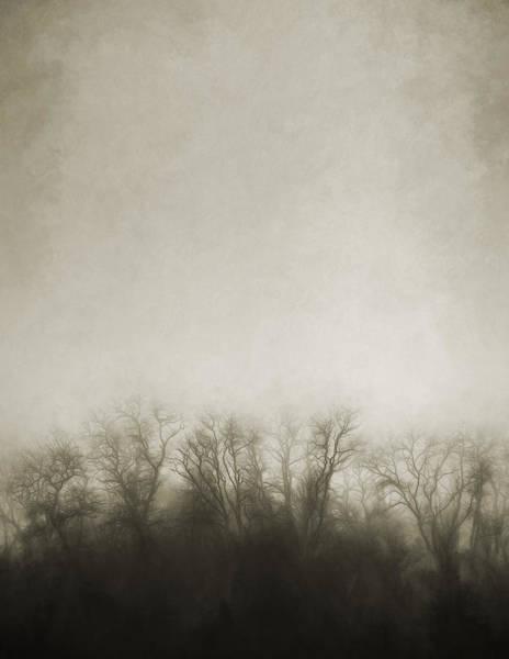 Dark Foggy Wood Poster