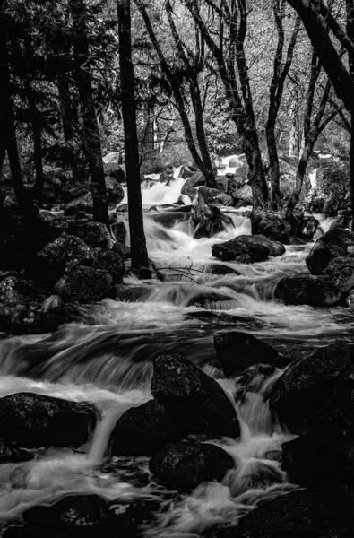 Dark Forest Bright Water Poster