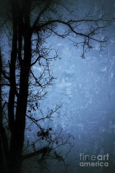 Dark Tree Silhouette  Poster