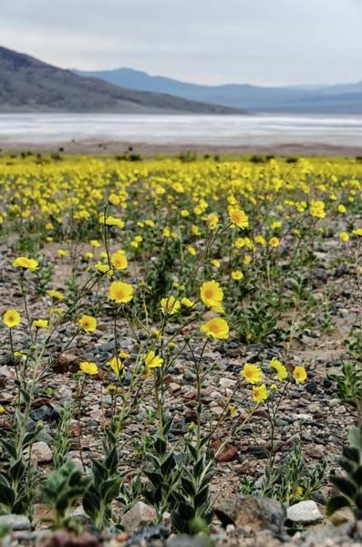Death Valley Super Bloom Poster