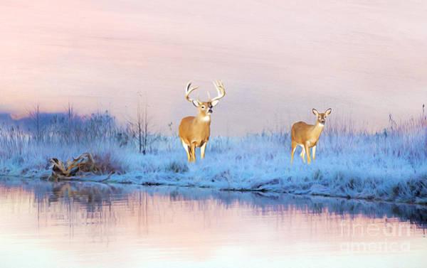 Deer At Winter Pond Poster