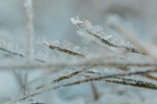 Delicate Morning Frost  Poster