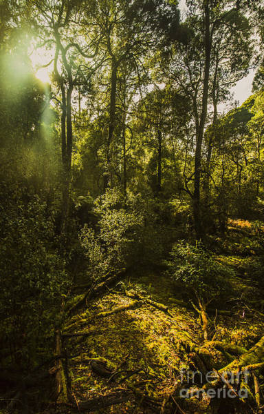 Dense Green Tropical Forest Poster
