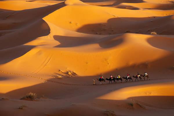 Desert And Caravan Poster