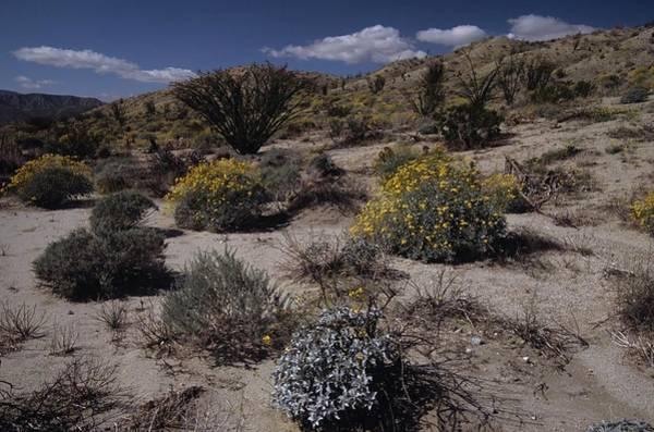 Desert Canyon Wildflower Bloom Poster