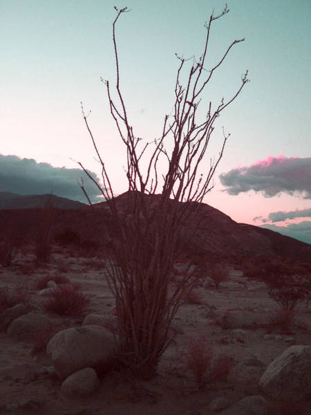Desert Plant And Sunset Poster
