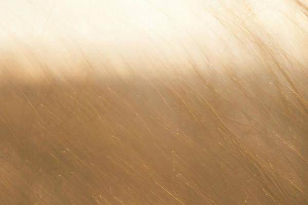 Desert Wind 2 Poster