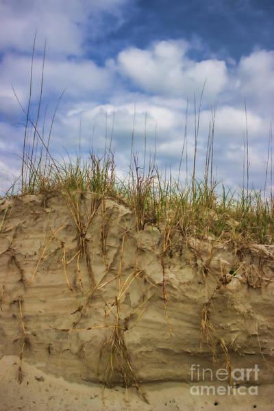 Digging In Deep In Sand Dunes Poster