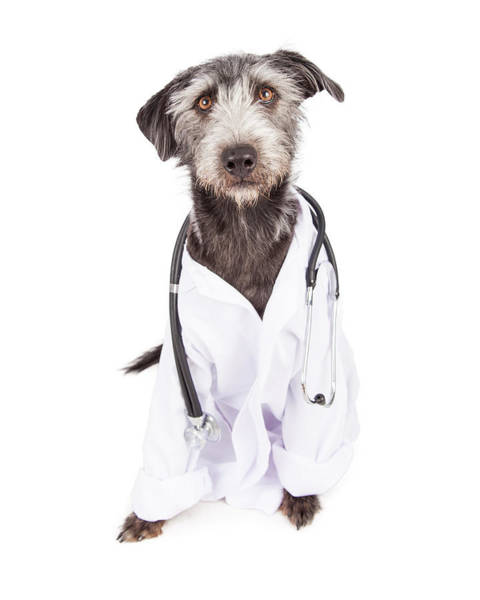 Dog Dressed As Veterinarian Poster