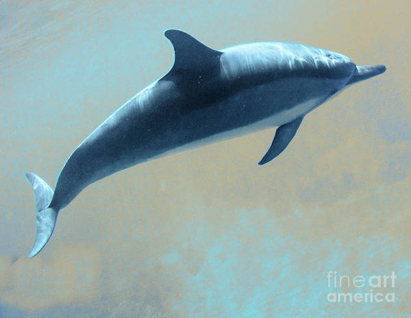 Dolphin 2 Poster