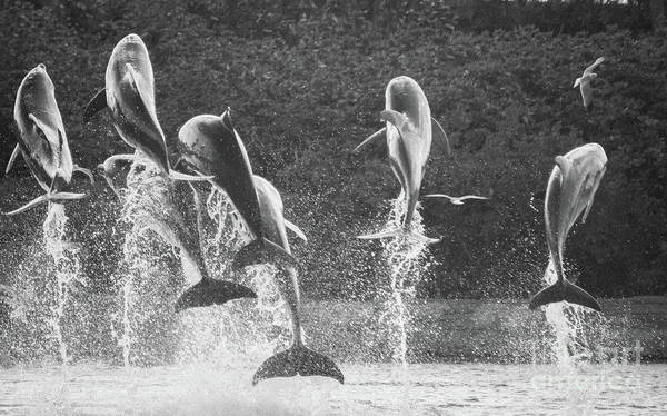 Dolphin Dance Poster
