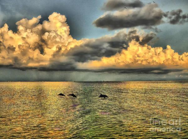 Dolphins Play At Sanibel Island Poster